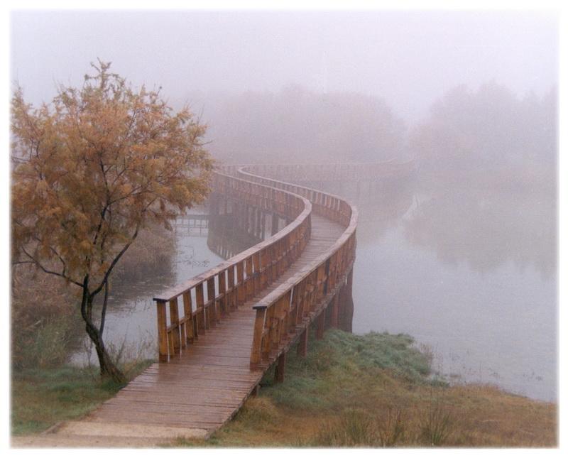 Niebla_en_las_tablas